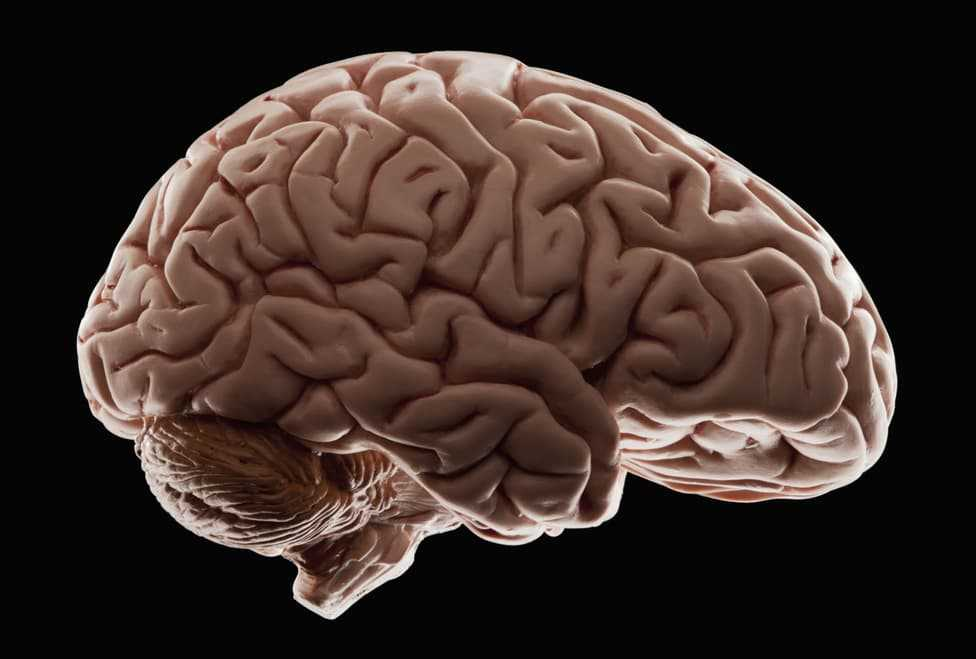 How Much Percent of Brain We Use?